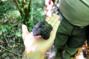 Truffles in Croatia